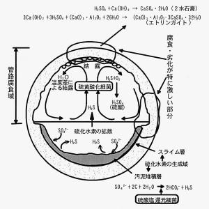 下水道管の腐食モデル(下水道管路施設腐食対策の手引き(案)H14より)